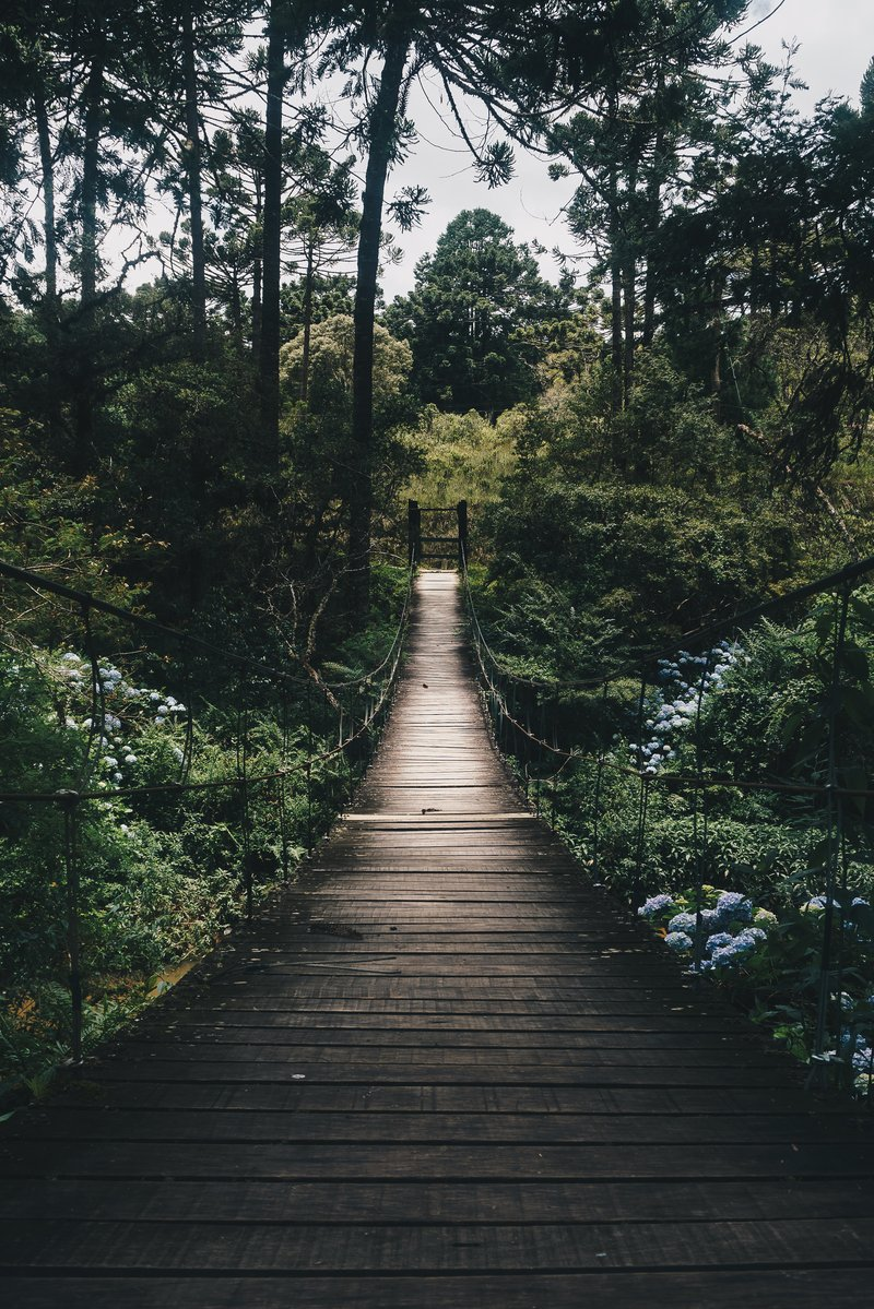 Mengenal Hutan Pasarean Ciamis, Tempat Yang Terkenal Mitos Angkernya