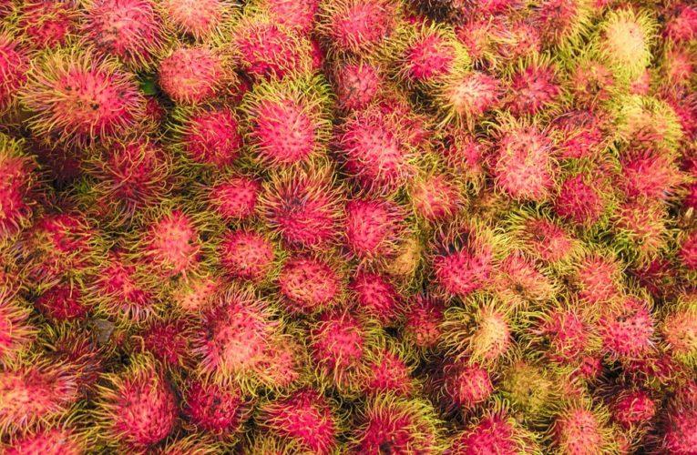 Ciri ciri daun rambutan