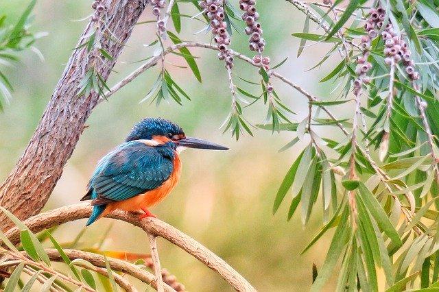 Makanan Anak Burung Pipit
