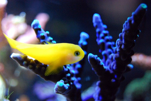 Jenis Ikan Yang Tidak Boleh Di Aquascape
