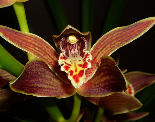 The 8 Most Magnificent Orchids in Indonesia